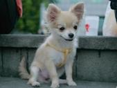 拍動態貓、狗:P1130637_裁切.JPG