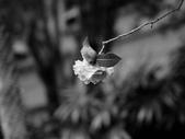 黑白集:P1020014.JPG