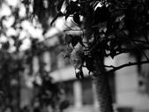 黑白集:P1020017.JPG
