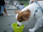 拍動態貓、狗:P1130622.JPG