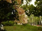 2012 台南公園 百花節 :P1290150.JPG