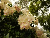 2012 台南公園 百花節 :P1290159.JPG