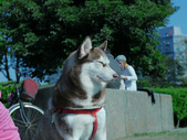 拍動態貓、狗:P1150856.JPG