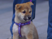 手動鏡頭 拍動態貓、狗:P1150220_裁切.JPG