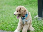 手動鏡頭 拍動態貓、狗:P1130566.JPG