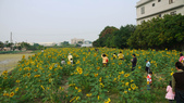 嘉義2011花海:P1210192.JPG