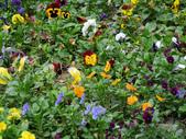 2012 台南公園 百花節 :P1290421.JPG