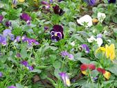 2012 台南公園 百花節 :P1290427.JPG