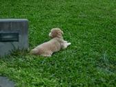 手動鏡頭 拍動態貓、狗:P1130571.JPG