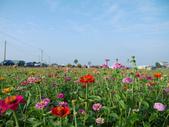 嘉義2011花海:P1210682.JPG