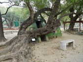 2012 台南公園 百花節 :P1290472.JPG