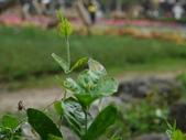 2012 台南公園 百花節 :P1290544.JPG