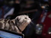 手動鏡頭 拍動態貓、狗:P1140656_裁切.JPG