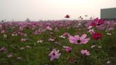 嘉義2011花海:P1210284.JPG