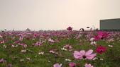 嘉義2011花海:P1210289.JPG