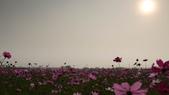 嘉義2011花海:P1210293.JPG