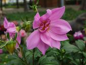 2012 台南公園 百花節 :P1290652.JPG