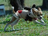 拍動態貓、狗:P1150849_裁切.JPG