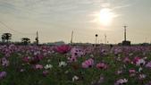 嘉義2011花海:P1210792.JPG