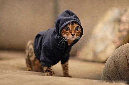 可愛動物大集合:可愛貓咪