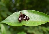 張三的歌:butterfly