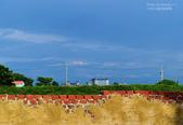 我的攝影習作:城鄉情