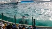 鴨川シーワールド:鴨川海洋世界17.20151111.jpg