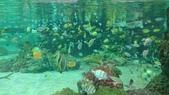 鴨川シーワールド:鴨川海洋世界27.20151111.jpg