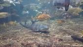 鴨川シーワールド:鴨川海洋世界6.20151111.jpg