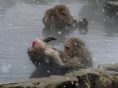生活筆記:日本地獄谷野猿公苑-04.jpg