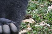 生活筆記:逆增上緣的猩猩 Bobo 與嬰猴-05.jpg