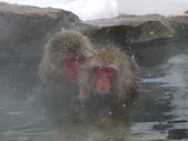 生活筆記:日本地獄谷野猿公苑-06.jpg