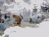 生活筆記:日本地獄谷野猿公苑-08.jpg