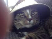 生活筆記:貓咪迪加 Didga.jpg