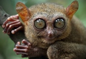 生活筆記:逆增上緣的猩猩 Bobo 與嬰猴-08.jpg
