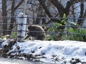 生活筆記:日本地獄谷野猿公苑-15.jpg