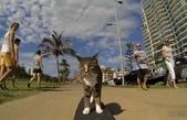 生活筆記:貓咪迪加 Didga-14.jpg
