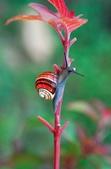 自然科學:古巴彩色蝸牛-09.jpg