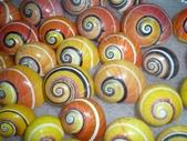 自然科學:古巴彩色蝸牛-10.jpg
