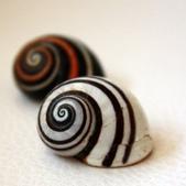 自然科學:古巴彩色蝸牛-12.jpg