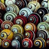 自然科學:古巴彩色蝸牛-14.jpg