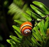 自然科學:古巴彩色蝸牛-15.jpg
