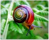 自然科學:古巴彩色蝸牛-16.jpg