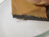 生活筆記:蚊-03.jpg