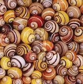 自然科學:古巴彩色蝸牛-19.jpg