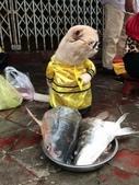 生活筆記:傳統市場販售海鮮水產的阿喵-06.jpg