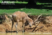 未分類相簿:麋鹿與駝鹿-12.jpg