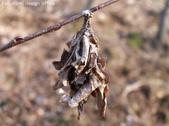 生活筆記:避債蟲-14.jpg