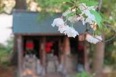 大阪京都旅遊:20140422163848.JPG