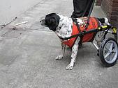 咪咪+輪椅:IMG_0683.JPG
